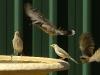 birds-072