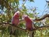 birds-things-008