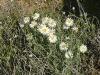 sandhill-flowers-007