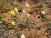 sandhill-flowers-009
